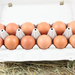 La douzaine d'œufs de poules plein air